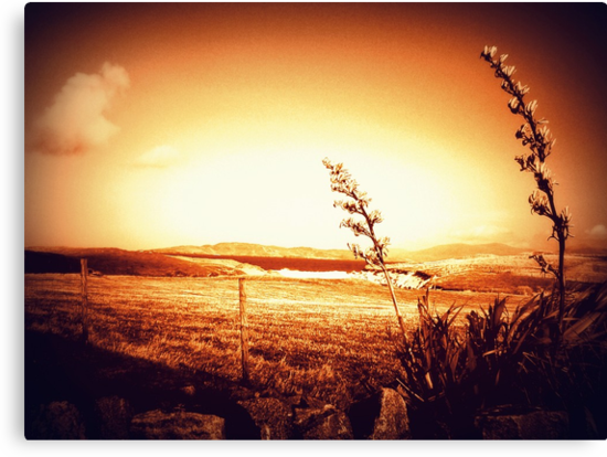 Harris in sepia by ©The Creative  Minds