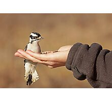 The Brave Little Woodpecker ~ Photographic Print