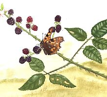 Comma and Blackberries. by JamesAlden