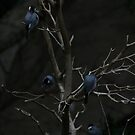 Birds on a Tree by FaithAmor