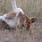 Rolling in the glen, Kenya by Martina Nicolls