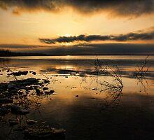 Golden Nights by Carolyn  Fletcher