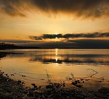 A Golden Evening by Carolyn  Fletcher
