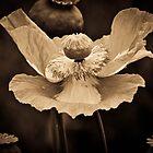 Poppy Angel by DessiKrastanova