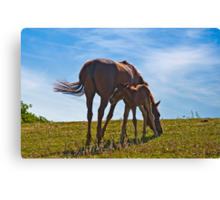 Mother care (V) Canvas Print