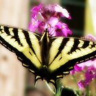 butterfly in bloom~ by Brandi Burdick