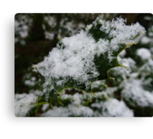 Snowy Holly Leaf Canvas Print