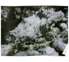 Snowy Holly Leaf Poster