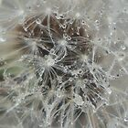 Dandelion with water by SherlockReader1