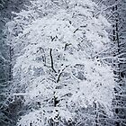 Dogwood after Snow by MsMelStevens