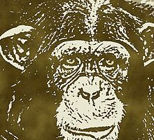 COMMON CHIMPANZEE by OTIS PORRITT