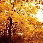 A golden tree on my way by Jocelyne Choquette