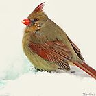 Female Cardinal in Snow by portblessed