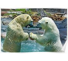 Polar bears wrestling - smash and dodge Poster