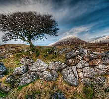 Loch Slapin Tree by Fraser Ross
