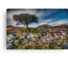 Loch Slapin Tree Canvas Print