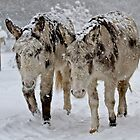 Donkeys in the snow by Gary Richardson