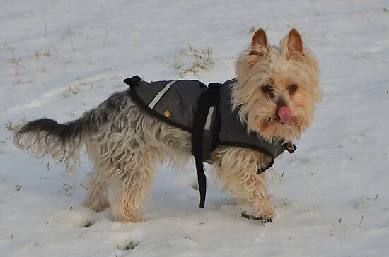 Pluisie in wintercoat by Nicole W.