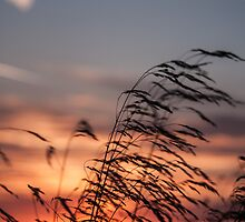 The Sunset Breeze by MorganaPhoto