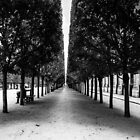 Avenue of Trees, Paris by MorganaPhoto