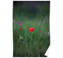 Wild Poppy Poster