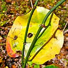 Autumn Bull Briar and Harvestman by MotherNature