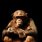 Chimp by Alinta T. Giuca