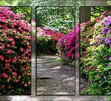 Azalea Triptych by photosbymo