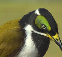 Blue-faced Honeyeater by myraj