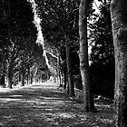 Parisian Path by Andrew Dickman