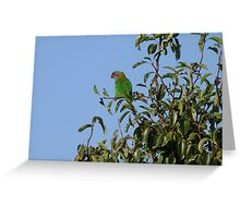 Lorikeet in my pear tree Greeting Card