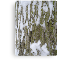 Snowy Bark Canvas Print