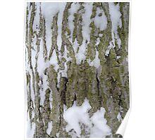 Snowy Bark Poster