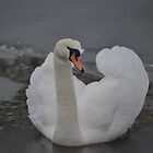 Frozen Swan Lake by Jodie  Davison