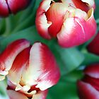 A few tulips by Susanna Hietanen