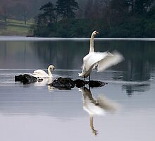 Dawn Display on Rydal Water, English Lake District by Martin Lawrence