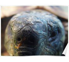 Close up tortoise Poster