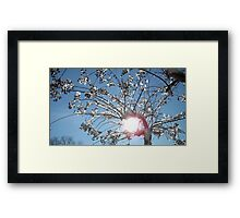 Tree Grabs The Sun  Framed Print
