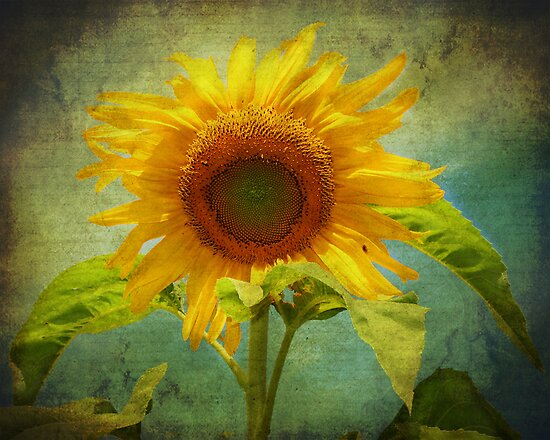 Gallery for gt vintage sunflower photography