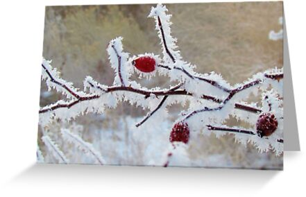 Frost Berry Red by Brenda Dahl
