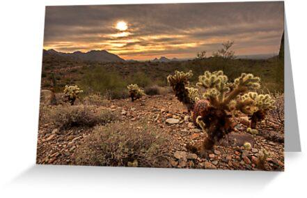 Desert Serenity by Sue  Cullumber
