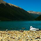 Seagull at Lake Rotoiti by srhayward