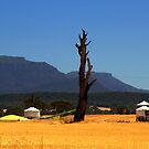 wheat country by fazza