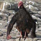 Chimpanzee Vulture by Felfriast