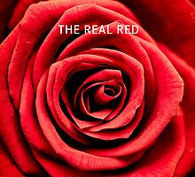 The red Rose by monsieurI