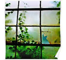 Green Leaves On Window ll Poster