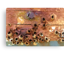 Empty Barnacle Shells On an Old Boat Canvas Print