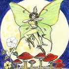 Luna Moth by David Webb