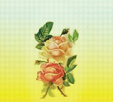 Roses by beberequin