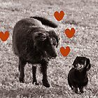Love comes in all shapes & sizes by Diana-Lee Saville